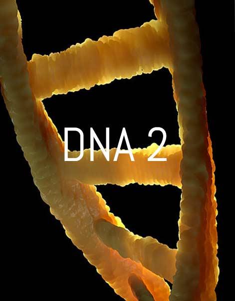 dna 2 corso avanzato theta healing